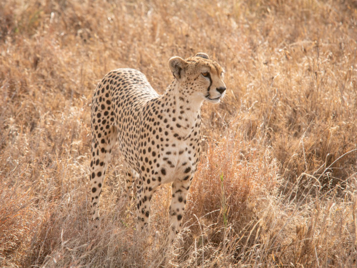 Tanzania - Northern Parks